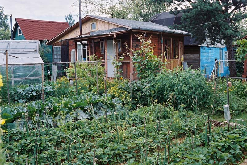 Дача и огород с фото