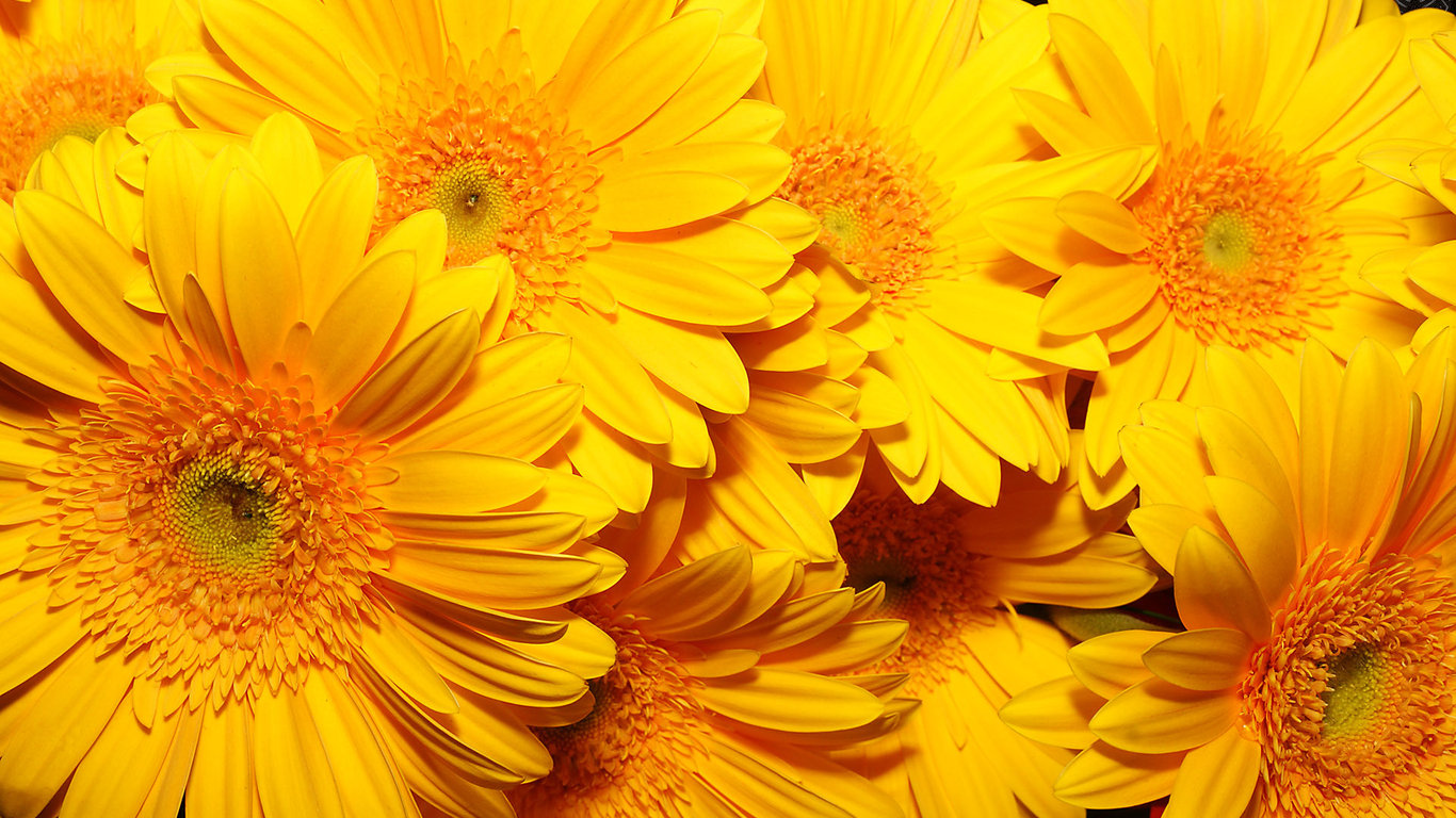 желтые цветы FullHD Фото Картинки Обои 1920x1080 21734