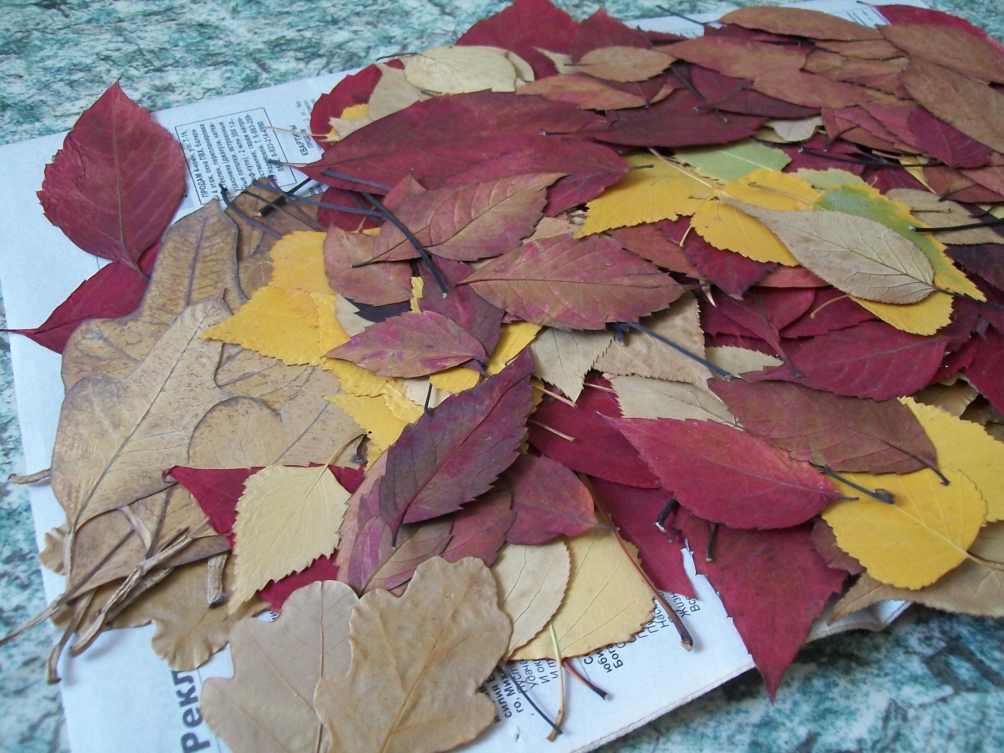 фото гербария из осенних листьев
