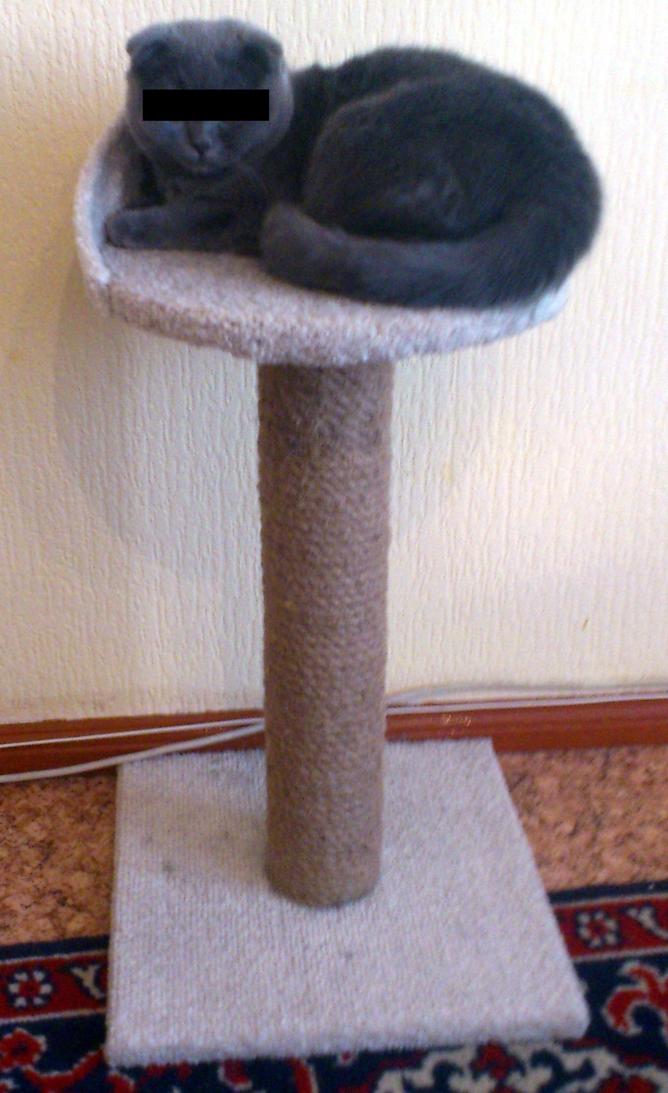 Когтеточка и домик для кошек своими руками видео