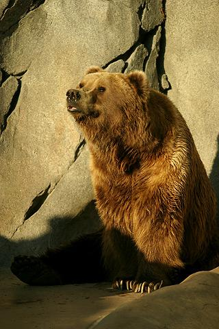 Саяногорск Инфо - lightmatter_alaskan_brownbear.jpg, Скачано: 235