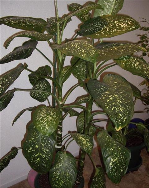 Домашние комнатные растения домашние фото
