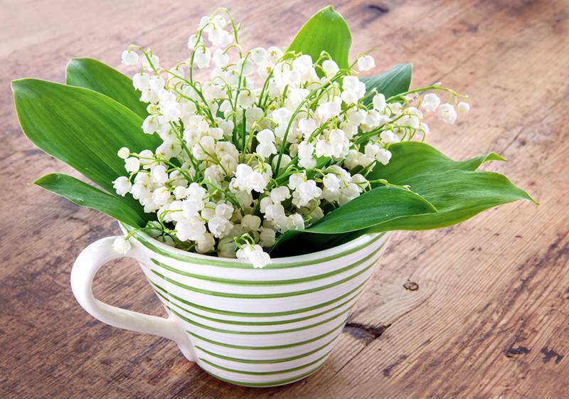 Букет весенних цветов картинки с днем рождения, днем