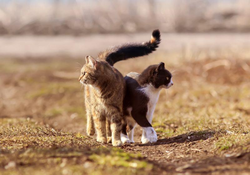заводить ли вторую кошку