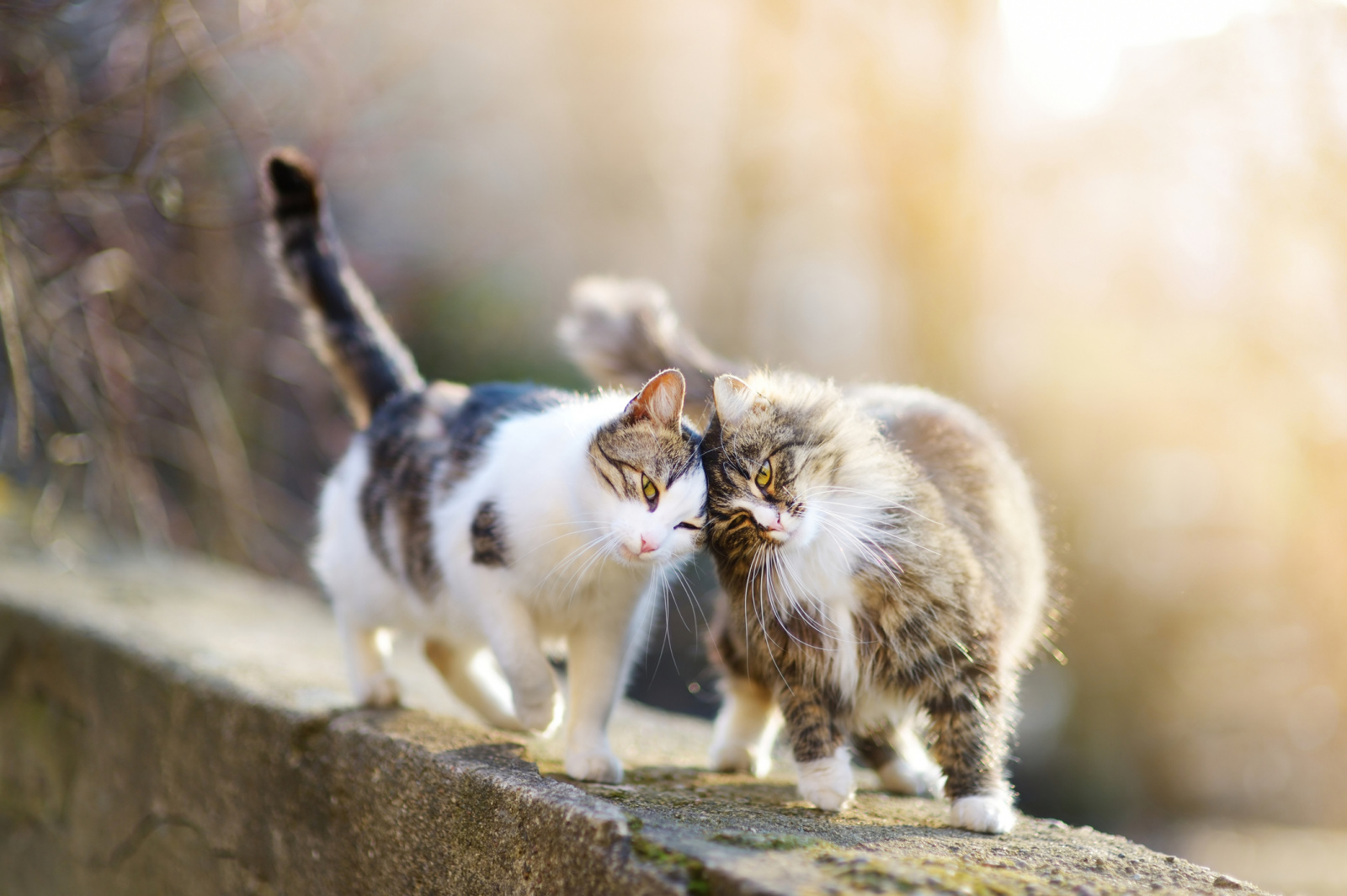завести вторую кошку