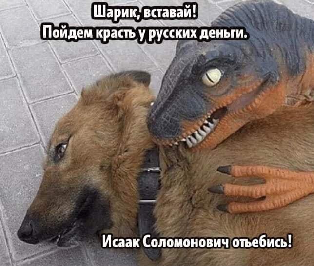 Шарик, вставай! Пойдем красть у русских деньги. Исаак Соломонович отъебись!