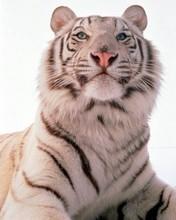 Как и в чем встречать год Тигра