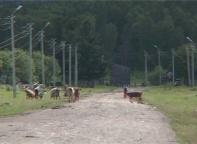 Гравийные дороги Саяногорска привели в порядок