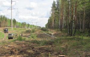 Саяногорские энергетики приступили к освобождению электролиний от лесного плена