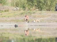 Саяногорские эпидемиологи запрещают купаться в реке Уй