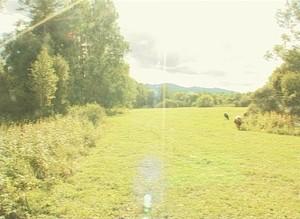Часть саяногорского леса отдали под места отдыха