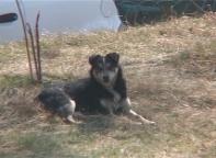 В Саяногорске за нападение  собаки ее хозяйка заплатит 2 тысячи рублей