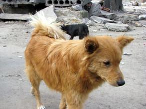 Саяногорские полицейские спасли бродячую собаку
