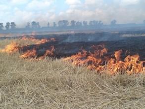 Лесники Хакасии начали профилактику лесных пожаров