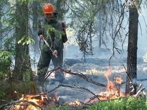 За сутки в Хакасии выгорело 8 гектаров леса