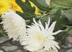 26 апреля – День памяти сотрудников МЧС, погибших при исполнении служебного долга