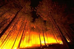 Сейчас горит лес под Саяногорском