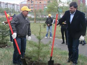 Сосны и ели украсили территорию больничного комплекса Саяногорска