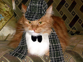 В Саяногорске на вора помогла выйти кошка
