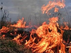Лесной пожар в районе Саяногорска потушили оперативно