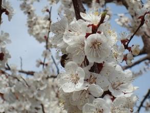 Садоводы Саяногорска получили почти 4 миллиона, но расчитывают на большее