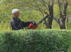 В Саяногорске продолжаются работы по озеленению