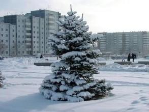 Подготовка к новогодним праздникам в Саяногорске вступила в активную фазу