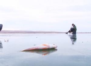 Выезд на машине на лед стоил жизни двум жителям Хакасии
