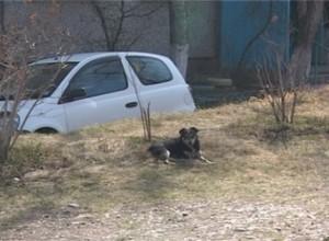 В Саяногорске появится крематорий для животных