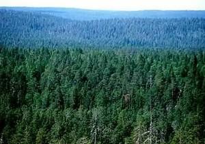 В Хакасии началась подготовка к лесным пожарам