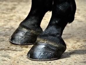 В Хакасии неадекватная лошадь спровоцировала ДТП