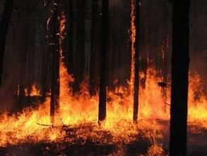 В Хакасии горит пять гектаров леса