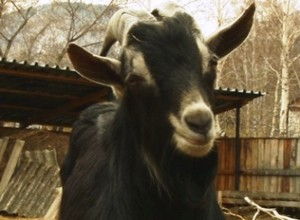 В Майна появится новый ветеринарный пункт