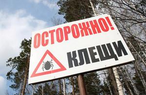 В Хакасии фиксируется большое количество случаев укуса клеща