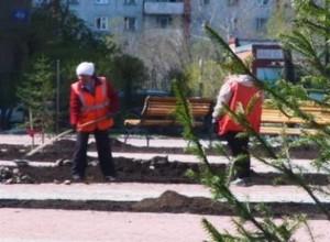 Саяногорский сквер продолжает озеленяться