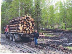 Ситуация с вырубками леса на Бабике дошла до депутатского корпуса Хакасии