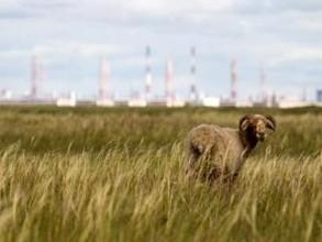 В Хакасии алюминиевое производство не вызвало загрязнения среды фтором