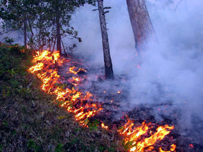 По вине отдыхающих в Хакасии произошел лесной пожар