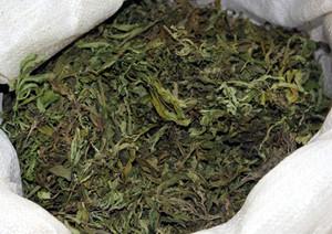 Наряд вневедомственной охраны задержал саяногорца с марихуаной в крупном размере