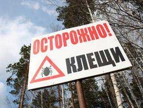 Почти 2 тысячи жителей Хакасии с начала сезона пострадали от укусов клещей