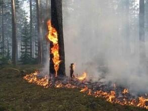В Хакасии лес вспыхнул из-за замыкания на ЛЭП