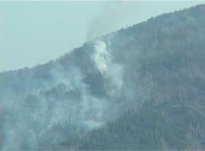 Лес загорелся от искры электропровода