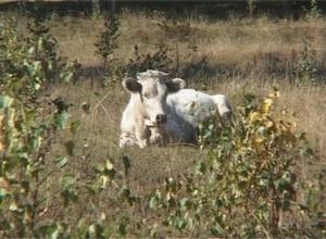 В Саяногорске обсудили животноводческие проблемы