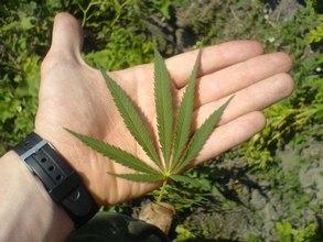 В Очурах изъяли более двух с половиной килограммов марихуаны