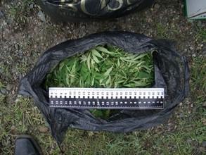 """В Хакасии трое любителей марихуаны пойдут под суд за сбор """"урожая"""""""