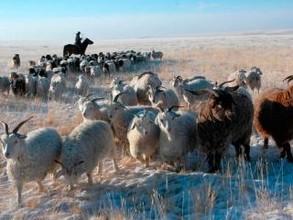 Хакасия вполне может стать процветающей аграрной провинцией