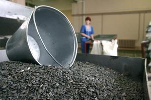 Со склада в Белгородской области украли более 100 мешков семечек