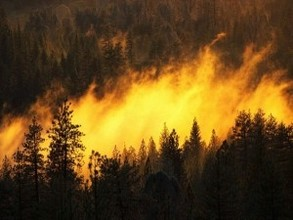 В Хакасии в выходные горел лес в нескольких районах