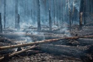 В Саяно-Шушенском заповеднике лесной пожар охватил более 1,2 тысяч гектаров