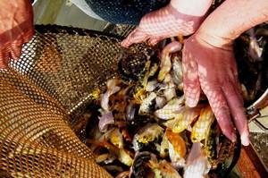 Рыбопромысловые участки в Хакасии обретут новых владельцев